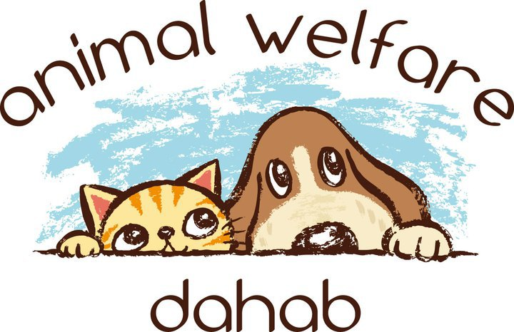 Animal Welfare Dahab