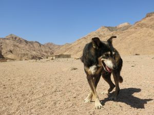 The Dog Wadi – One Year Later